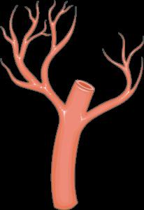 Artère arbo