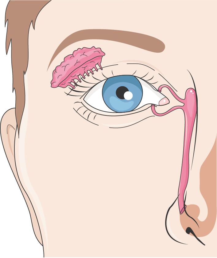 canal lacrimal