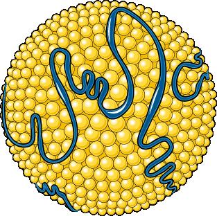 chylomicron