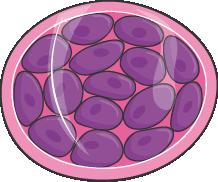 Culture cellules souches