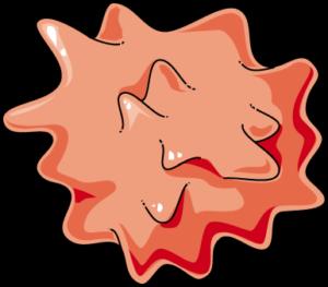 Hématie hypertonique