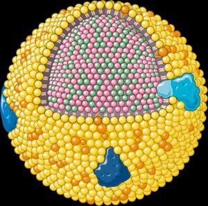 lipoproteine