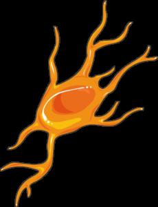 Neuroblaste