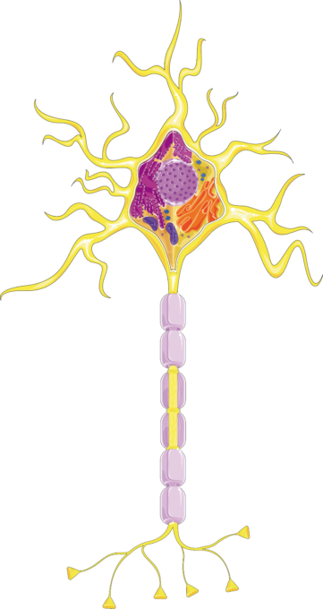 SMART Neuron with myelin, 5%