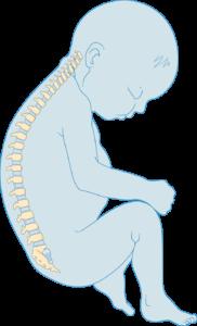 Squelette de nouveau-né