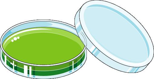 Boîte de Petri