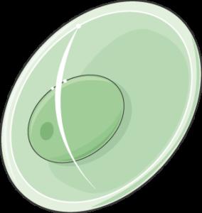plasmodium gamétocyte fem