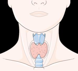Thyroïde hypo