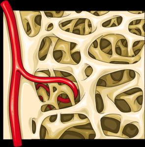 Trame osseuse artère