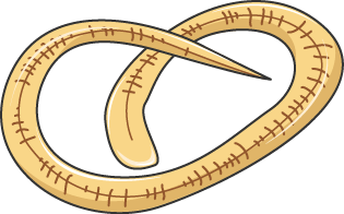 trichinella larve