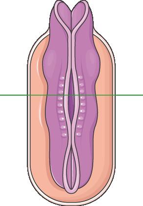 tube neural