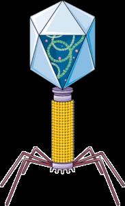 Bactériophage
