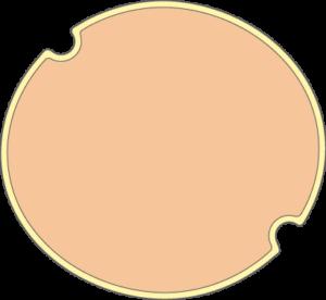 Cellule vide avec vacuoles