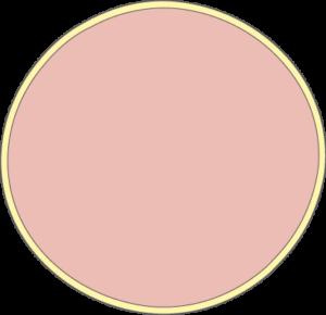 Cellule ronde