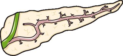 coupe pancreas