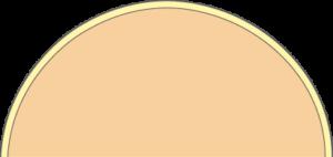 Membrane cellulaire