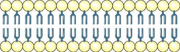 Membrance cellulaire