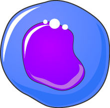 Monocyte bleu