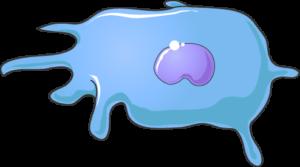 Monocyte bleu ciel