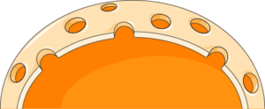 Noyau