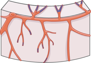 Perfusion coronaire