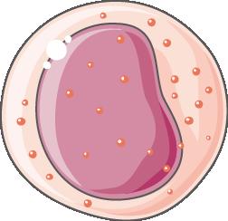 prépolynucléaire éosinophile